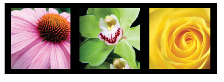 Lanza Healing ColorCare Trauma Treatment 150ml