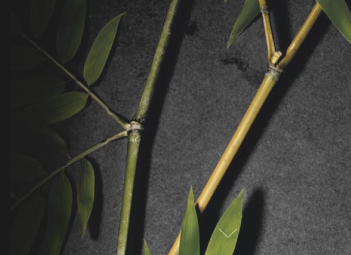 Orofluido Asia Zen Control Conditioner 200ml